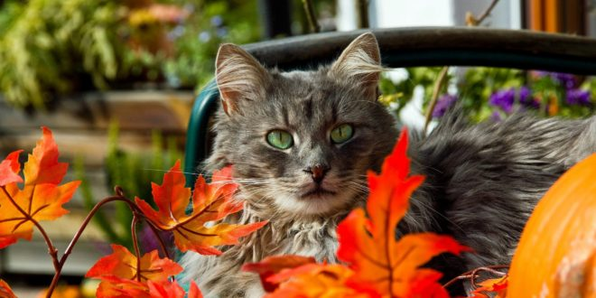 Ухаживаем за кошкой в осенний период